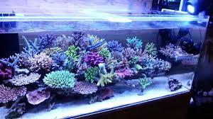 Kessil Aquarium Light Kessil A360x With Spectral X Review Marine Aquarium