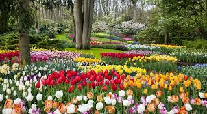 did you know the world s largest flower garden keukenhof is only open two months per year