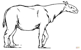 Paraceratherium extinct rhinoceros-like mammal coloring page ...