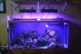fish tank lighting ideas. Here\u0027s How Mine Are Hung Right Now....I Hate The Shelf Above My Tank But This Was A Rush Job, I Will Build Canopy Fish Lighting Ideas