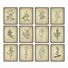 new 30 herb wall art decorating design of herb wall art