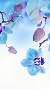 orchid 5k 4k wallpaper flowers blue white vertical