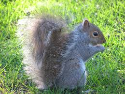 How To Protect Your Fruit Trees From Squirrels