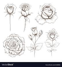 Hand Drawn Rose Flowers Set Royalty Free Vector Image