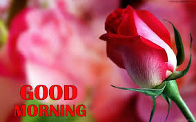 good morning with flowers pictures images photos