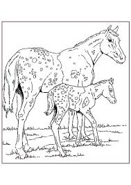 Appaloosa Paarden Kleurplaat Jouwkleurplaten