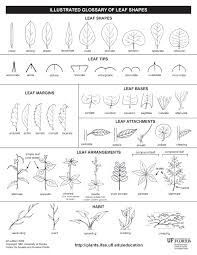 7 Leaf Tree Id Key Review Biological Science Picture