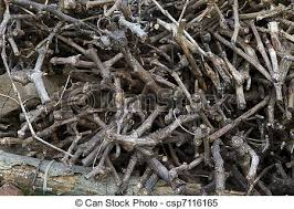 Dried Tree Branches Stock Photo