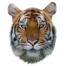 tiger face newmoji