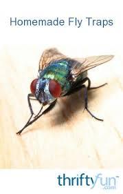 getting rid of flies thriftyfun