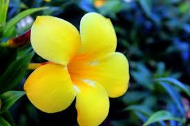 yellow flowers hd free hd