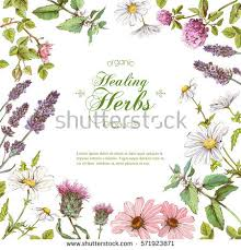 Small Picture Herbs Stock Images Royalty Free Images Vectors Shutterstock