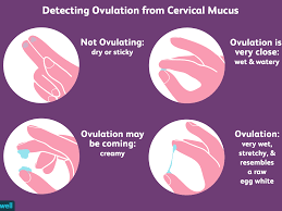How To Check Your Cervical Mucus And Detect Ovulation