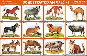 Educational Charts Manufacturers In India Spectrum Educational Charts Chart 118 Domesticated