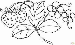 27 Coloring Pages Hawaiian Flowers Collection Coloring Sheets