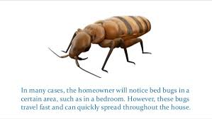 What To Expect In A Bed Bug Treatment