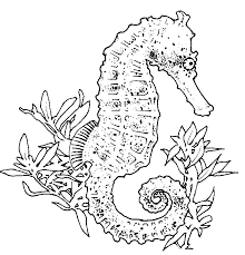 Realistic Seahorse Coloring Page Seahorses Pinterest Coloring