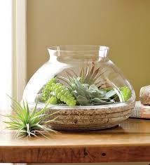 Glass Terrarium Containers for Sale   ... : Planters and Pots : Glass  Terrarium