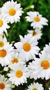 Cute Mobile Iphone Flower Wallpaper Hd ...