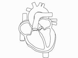 Small Picture Human Heart Coloring Pages Coloring Pages Pinterest Human