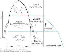 Chapter 4 Blood Flow To The Lung Pulmonary Physiology 8e