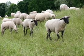Hasil carian imej untuk painting or sketch Shepherd and sheep grazing in the meadow