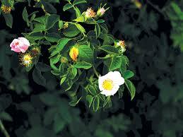 <b>Wild summer</b> plants to balance the state of the season ...