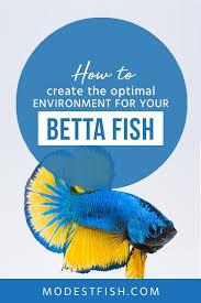 Betta Fish Care Sheet Expert Guide On Creating An Optimal
