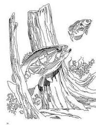 Small Picture Top 25 best Largemouth bass ideas on Pinterest Largemouth bass
