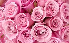 Pink flowers wallpaper, Rose wallpaper ...