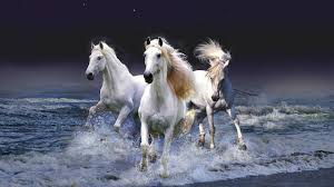 white horses running in water. Delighful Water White Horses Running Through Water Or Sea To Horses Running In Water N
