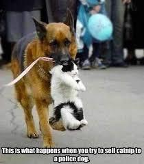 Dog Best Friend Quotes Extraordinary ShangralaFamilyFun Shangrala's Police Dogs