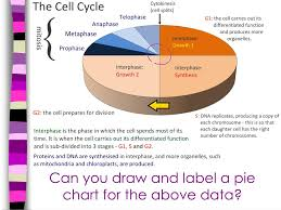 Cell Cycle Pie Chart Ppt Ib Biology Powerpoint Presentation Id 2469804
