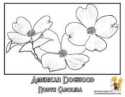 Small Picture State Flower Printouts Nebraska Oregon Flower Coloring