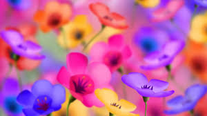 Colorful Flowers Wallpapers HD ...