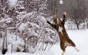Winter cat ...