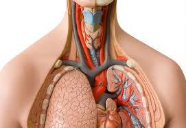 essay on human heart in hindi types of essays essay on human heart in hindi