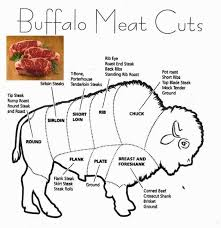 Buffalo Cuts Chart For Years Indians Living On The Plains Of America Hunted