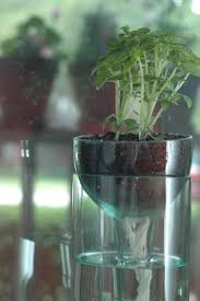 Self watering planter made from recycled wine bottle. perfect for indoor  fall greenery