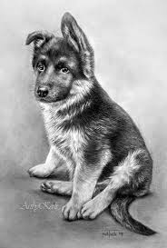 Moeilijk Herdershondje Pupie Kleurplaten Dieren Tekenen Honden