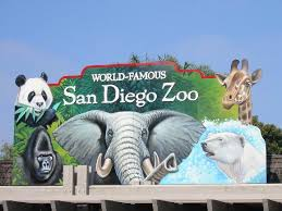 ideas about San Diego Zoo on Pinterest   San Diego  Chengdu     OnBreaking Tips For Visiting The San Diego Zoo
