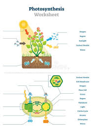 Photosynthesis Alphabet Chart Biology Photosynthesis Stock Illustrations 565 Biology