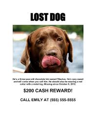 how to make lost dog flyers how to make a flyer with 3 sample flyers wikihow
