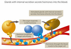In any case, try to do the test as soon as possible due to the fact that waiting to see the result of a treatment is the most difficult moment from an emotional standpoint. Hormone Imbalance And Hormone Level Testing Health Testing Centers
