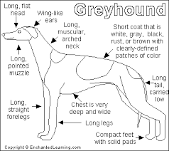 Small Picture Greyhound Printout EnchantedLearningcom