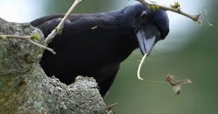 Crow Vending Machine Plans Amazing SOUMIK Jr