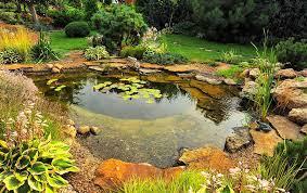 effectively get rid of pond sludge