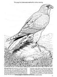 Small Picture Hawk coloring page httpenjoycoloringcomhawk printable