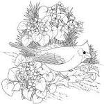 Раскраски для взрослых птиц