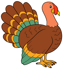 Image result for turkey pictures